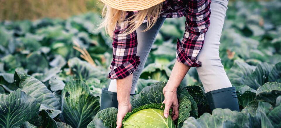 Høst naturens vitaminbomber og styrk immunforsvaret til den kommende vinter!